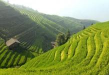 Рисовые террасы. Китай