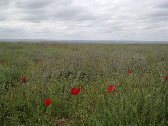 «Калмыцкая степь в апреле» участника Atami - собственная работа. Под лицензией CC0 с сайта Викисклада.