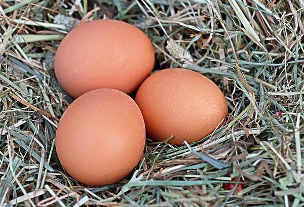egg-1175620_960_720