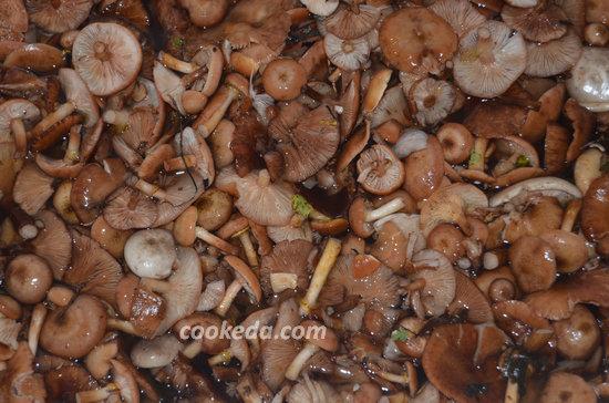Как хранить белые грибы в домашних условиях 932