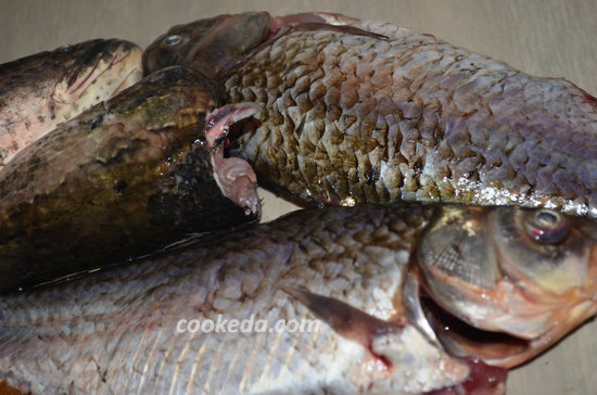 уха из пресноводной рыбы-03