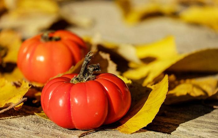 Свойства помидоров
