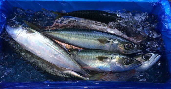 Срок хранения рыбы