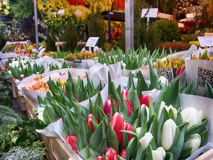 Фестиваль тюльпанов. Амстердам