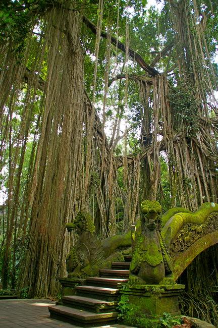 Парк обезьян, Бали